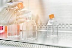 Le chercheur de femmes à l'aide de la pipette et le flacon de culture cellulaire font la technique aseptique pour changer le mili images stock