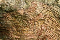 Le chert plié pose à la roche d'arc-en-ciel, Orégon Images stock