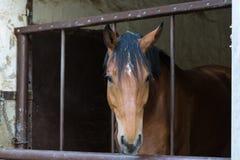 le cheval à la ferme de goujon au mois de ressort peut en Allemagne du sud Co rurale Photos stock