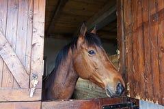 Le cheval 2 Images libres de droits