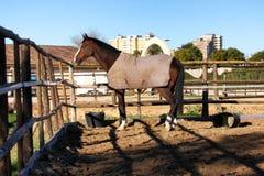 Le cheval Images libres de droits