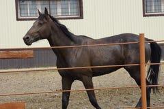 Le cheval Photos libres de droits
