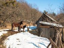 Le cheval adulte se tient à côté du poulain Image stock