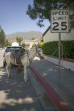 Le cheval attaché à un signe détend sur une petite rue pendant le quatrième de la célébration de juillet dans Ojai, CA Photo stock