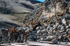 Le cheval a collé sa tête par la barrière en pierre photo libre de droits