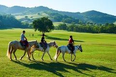 Le cheval d'équitation de jeune Photo libre de droits