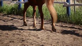 Le cheval dans le pré banque de vidéos