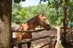 Le cheval dans le pré Photos stock