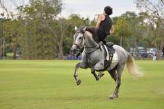 Le cheval de cascade d'équitation d'homme images libres de droits
