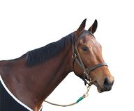 Le cheval de course Image stock