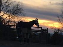 Le cheval a empaqueté dans des couvertures une nuit froide d'hiver avec le coucher du soleil photographie stock
