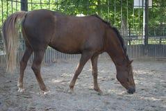 Le cheval est dans le pré Images libres de droits