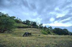 Le cheval et le bébé de mère poulinent au champ vert Montagnes de l'Azerbaïdjan caucase Image libre de droits