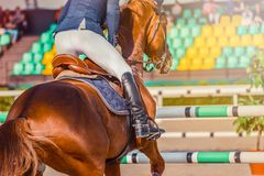 Le cheval et le cavalier de dressage d'oseille dans l'exécution uniforme sautent à la concurrence de sauter d'exposition Fond de  Photographie stock libre de droits