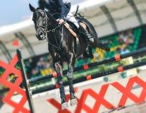 Le cheval et le cavalier noirs de dressage dans l'exécution uniforme blanche sautent à la concurrence de sauter d'exposition Fond Photo stock