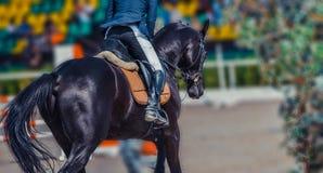 Le cheval et le cavalier noirs de dressage dans l'exécution uniforme blanche sautent à la concurrence de sauter d'exposition Fond Image stock