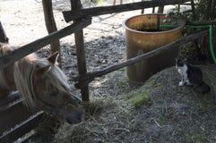 Le cheval et le chat Photos libres de droits