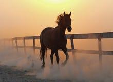Le cheval fonctionne contre la poussière images libres de droits
