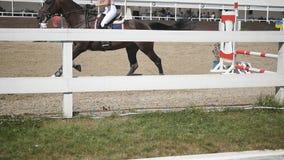 Le cheval fonctionne et saute par une barrière à la compétition sportive Fermez-vous de galoper de pieds de cheval Tours professi clips vidéos