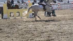 Le cheval fonctionne et saute par une barrière à la compétition sportive Fermez-vous de galoper de pieds de cheval Tours professi banque de vidéos