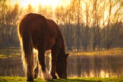 Le cheval frôle par le lac en soleil photographie stock libre de droits