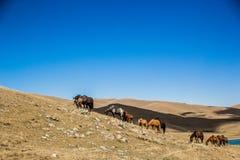 Le cheval frôlent le long du lac Photographie stock libre de droits