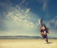 Le cheval joue sur le fond d'un champ d'automne et d'un beau ciel bleu Photos stock