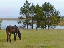 le cheval mange l'herbe au class?e image stock