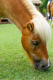 le cheval mangent Photographie stock