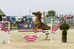 Le cheval manqué sautent photo libre de droits