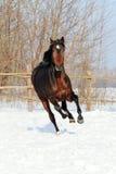 Le cheval marche hiver Photo libre de droits