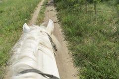 Le cheval marche le long du champ Vue de ci-avant Photo libre de droits