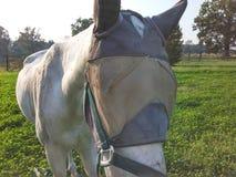 Le cheval masqué Photographie stock