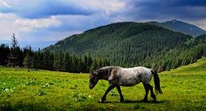 Le cheval par les montagnes Photos libres de droits