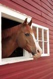 Le cheval regarde à l'extérieur l'hublot Image libre de droits