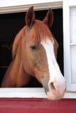 Le cheval regarde à l'extérieur l'hublot de grange Images libres de droits