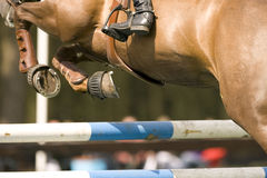 Le cheval sautant 012 Photo stock