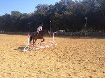 Le cheval sautant par-dessus la barrière Photos libres de droits