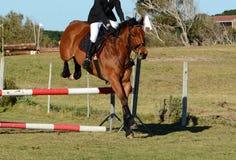 Le cheval sautant un saut Images libres de droits