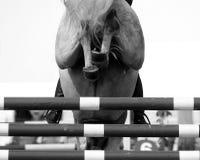 Le cheval sautent Photo libre de droits