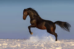 Le cheval sautent Image libre de droits