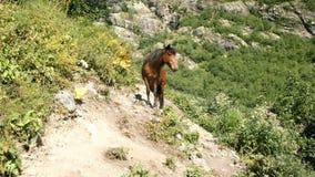 Le cheval sauvage de Brown avec une crinière velue noire se tient dans les montagnes un jour ensoleillé image stock
