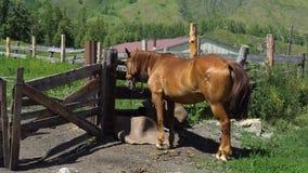 Le cheval se tient à côté du stylo clips vidéos
