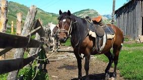 Le cheval se tient à côté du stylo banque de vidéos