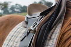 Le cheval sellé et préparent pour monter photographie stock libre de droits