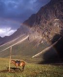 Le cheval sous l'arc-en-ciel Photo stock