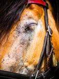Le cheval vole dans l'oeil photo libre de droits