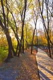 Le chevalet en bois et le coucher du soleil tombé de feuilles Photographie stock libre de droits