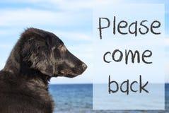 Le chien à l'océan, texte veuillez revenir Photographie stock libre de droits