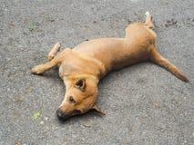 Le chien égaré Photographie stock